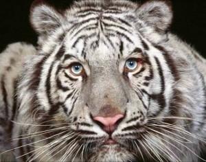 Hayvanlar hakkında bilgiler hayvanlar dünyası ile ilgili bilgiler