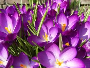 çiçek Isimlerinin Anlamları